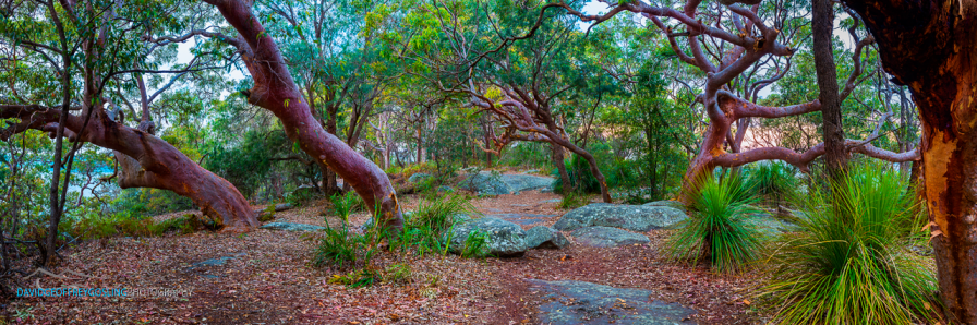 Mt Ettalong trees 2