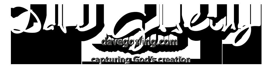 DavidGeoffreyGosling Photography blog logo